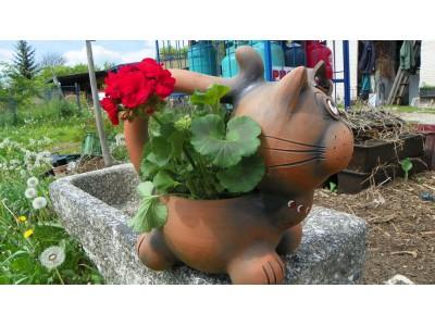 Kočka velká, květináč s ocasem...