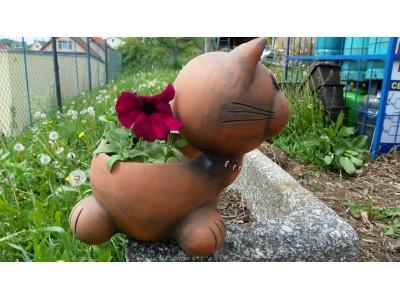 Kočka květináč
